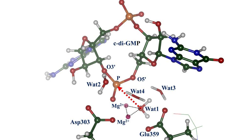 Revealing-molecular-mechanism4