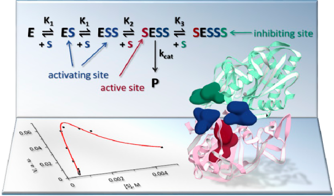 Three Faces of N-Acetylaspartate: Activator, Substrate, and Inhibitor of Human Aspartoacylase