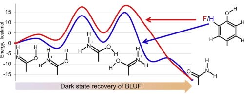 Molecular mechanism of the dark-state recovery in BLUF photoreceptors