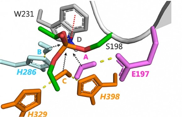 Optimization of Cholinesterase-Based Catalytic Bioscavengers Against Organophosphorus Agents
